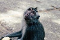 Monkey Sanctuary Ubud
