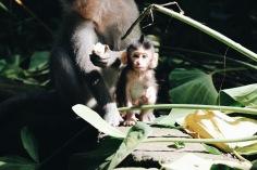 Ubud monkey sanctuary
