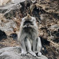 Climbing - Lombok